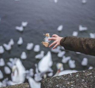 A hand throwing bread